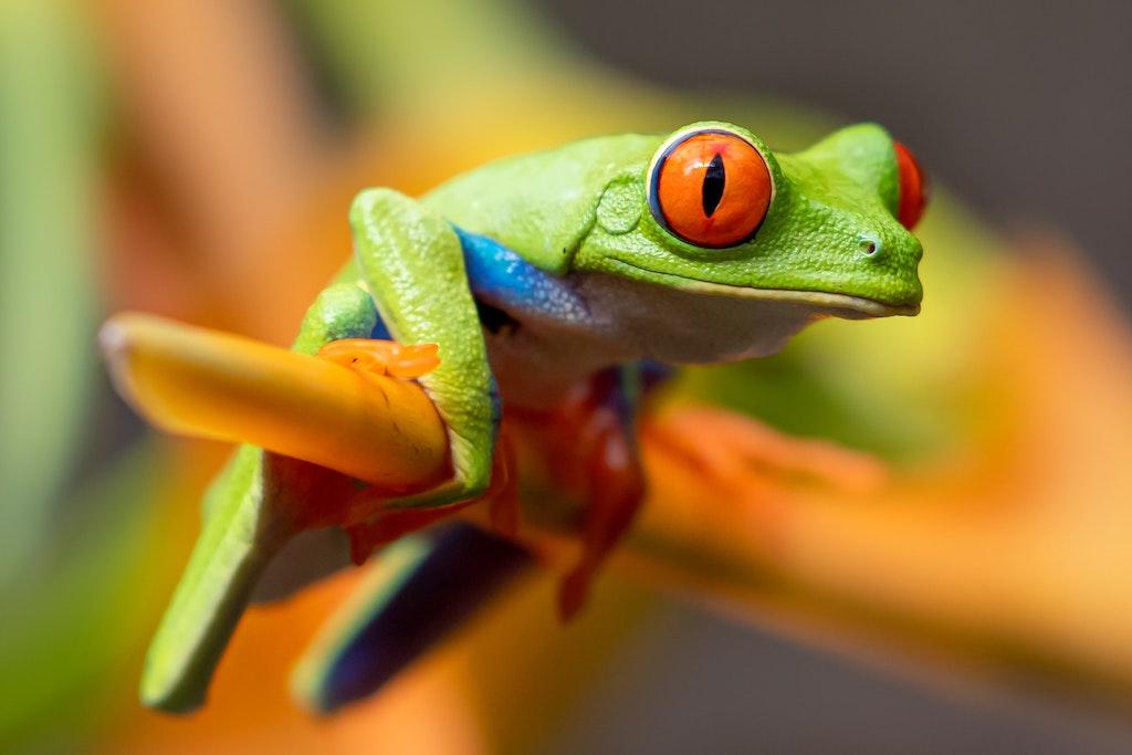 Frog Live Love Costa Rica Real Estate for Sale Beach - photo by stephanie-leblanc.jpg