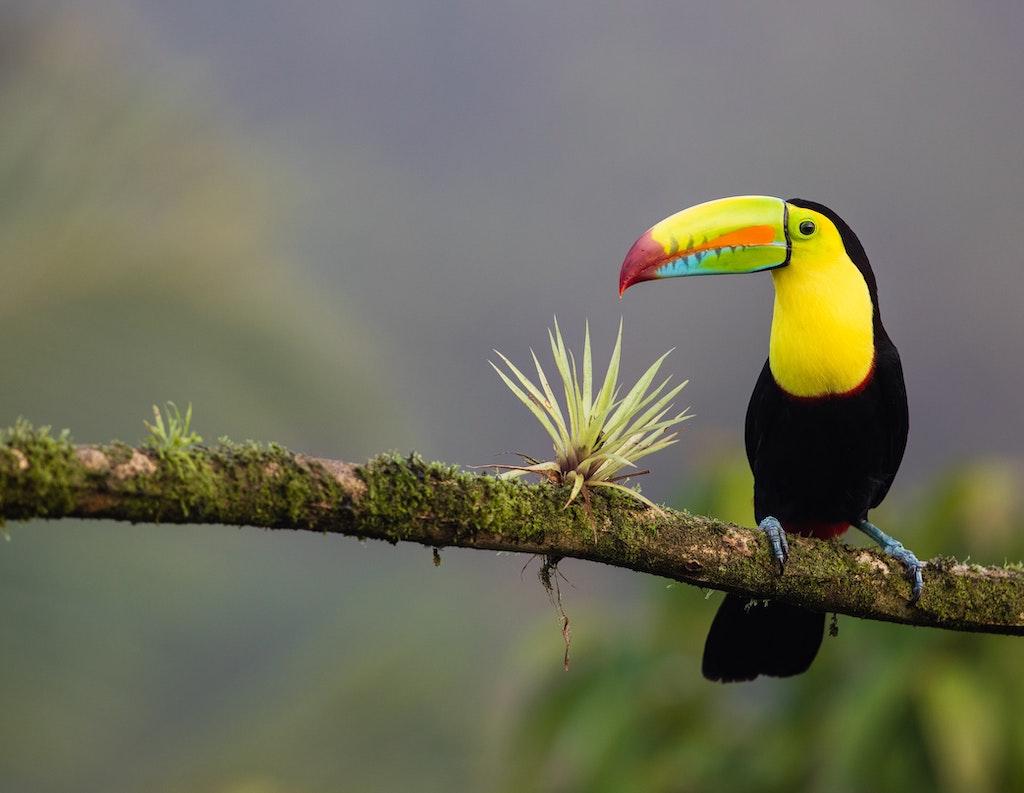 Live Love Costa Rica Real Estate for Sale zdenek-machacek.jpg
